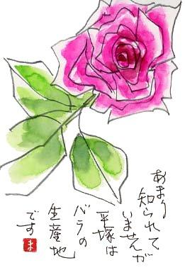 平塚のバラを絵手紙に描いて送りましょう。