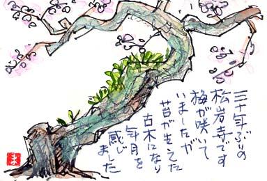 平塚八景、松岩寺の梅の老木。